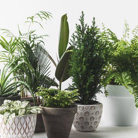 Plantas Adda Home